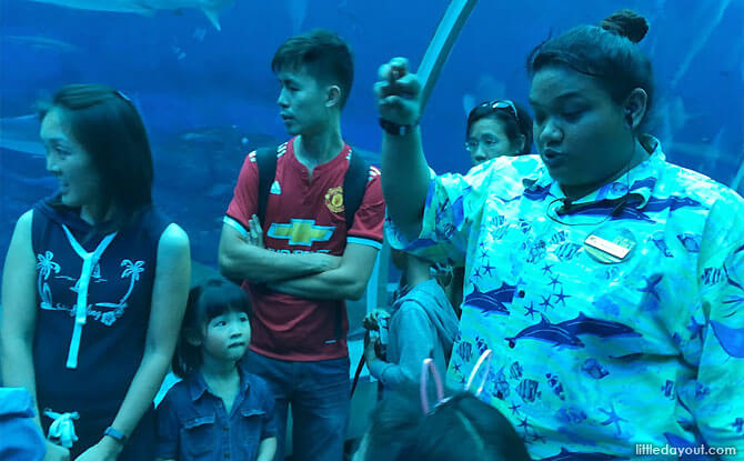 Learning about S.E.A. Aquarium's marine life