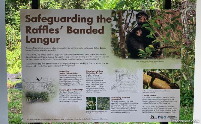 Raffles' Banded Langur Information Panel