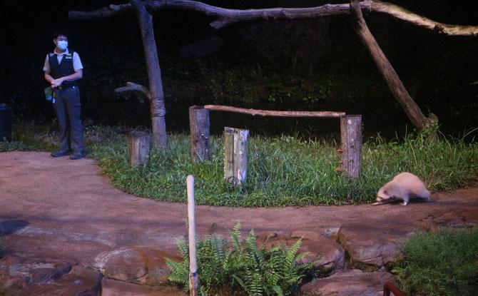 At the Night Safari