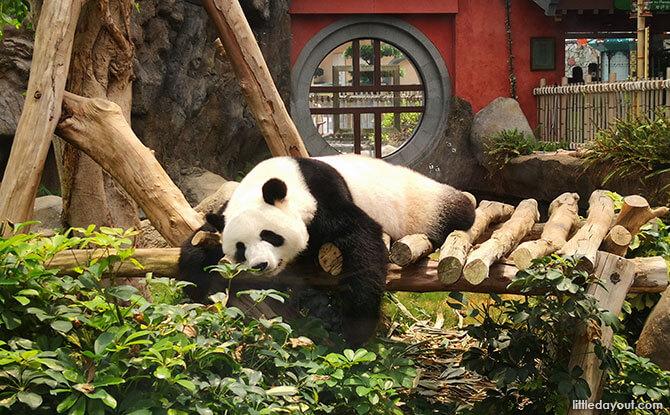 Ocean Park's Panda Village