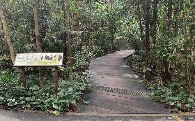 Mangrove Boardwalk, Admiralty Park