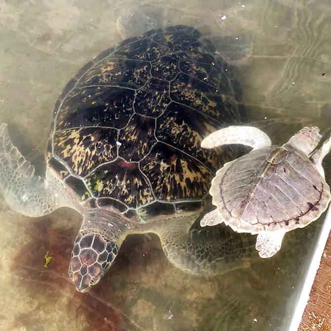 Turtle Centre for Conservation and Education, Serangan Island