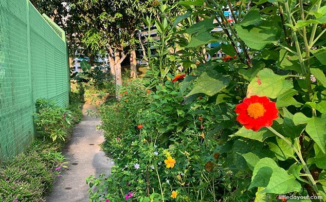 Community Garden and Trail at Bukit Panjang Neighbourhood 2 Park