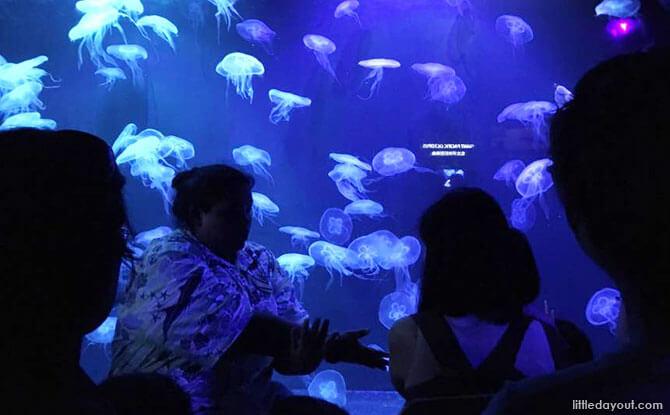 Sea Jellies exhibit