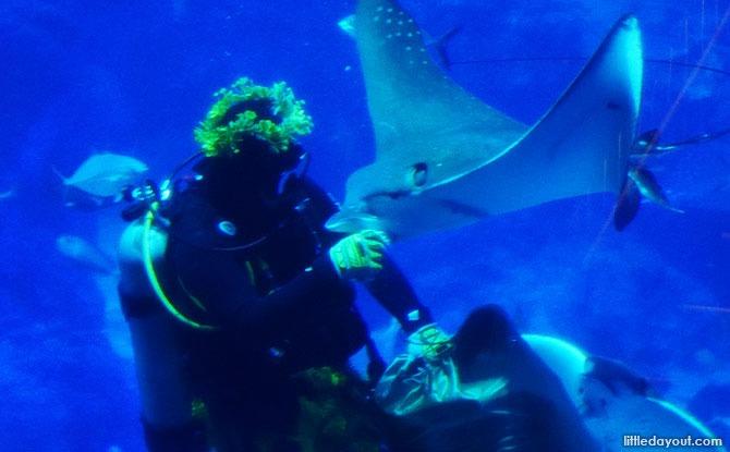 Tiki Warrior Dive Feed