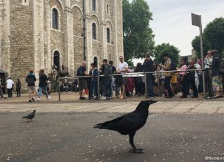 Useful Tips And Things To Know About Visiting The Tower Of London