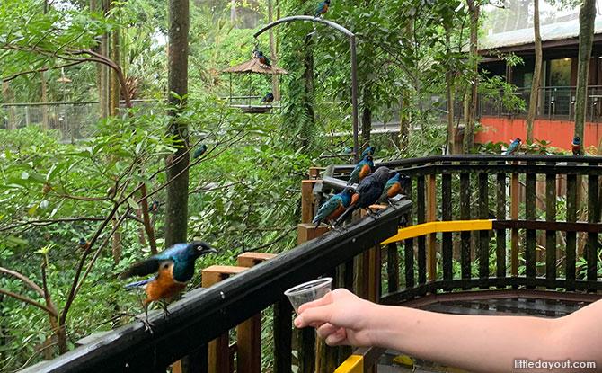 Bird-feeding Experiences at African Treetops, Jurong Bird Park