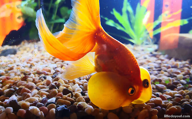 Goldfish Treasures
