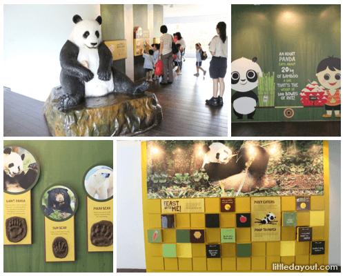 Panda Exhibits