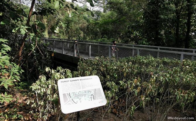 bird-attracting plants