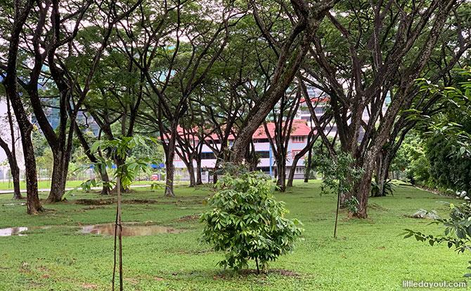 Opium Plant Site