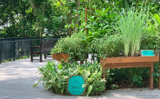 Sensory Trails, Gardens & Parks In Singapore: Engaging The Five Senses
