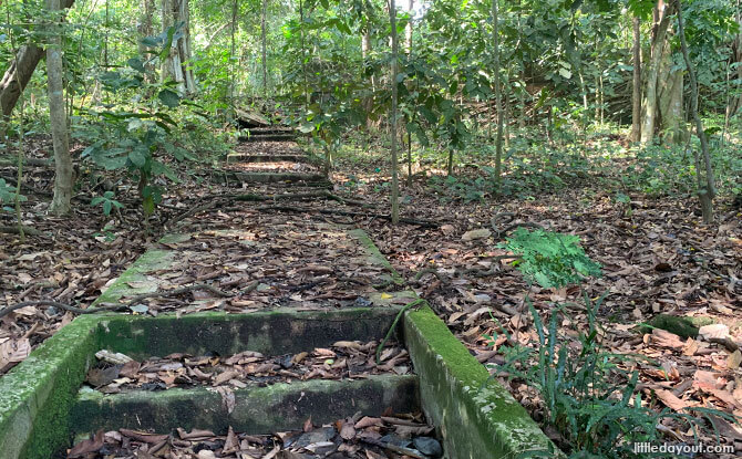 Stairs to nowhere - Trail at Thomson Nature Park
