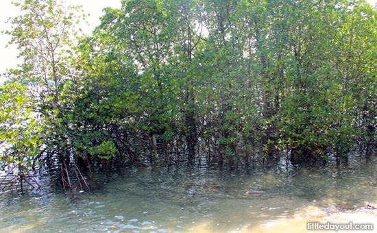 Mangrove Goodies