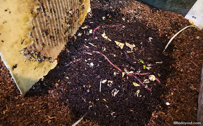 Food waste is turned into compost by earthworms in the wormery