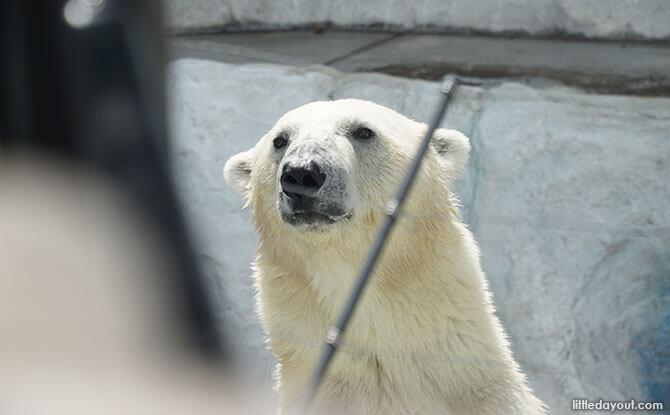 Polar Bear at Ueno Zoo