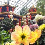 Dahlia Dreams at Gardens by the Bay 2019: Wandering Through A Chinese Garden