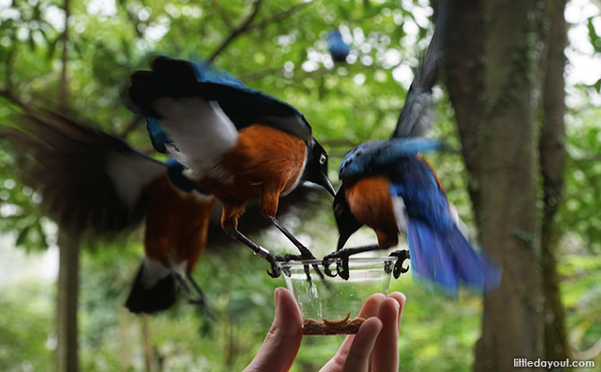 Feeding the birds at Jurong Bird Park
