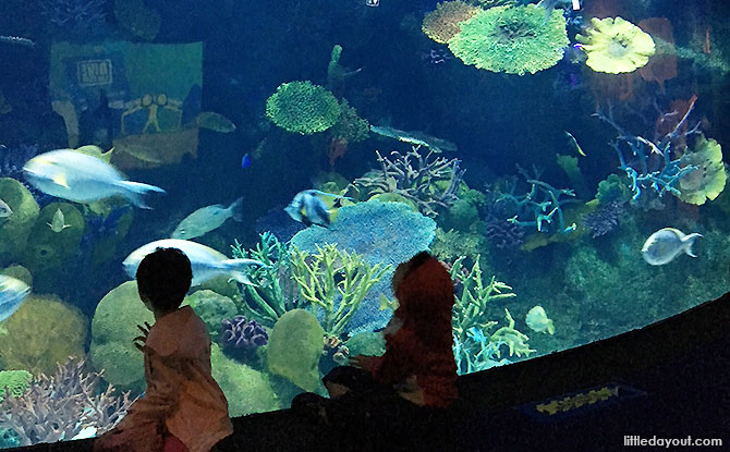 Visiting Sea Life Bangkok with kids - What to see