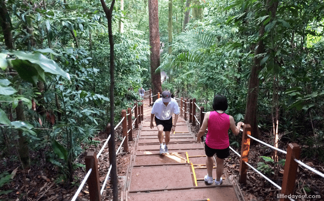 Nature Appreciation Walk at Bukit Timah Nature Reserve - 18 May 2019
