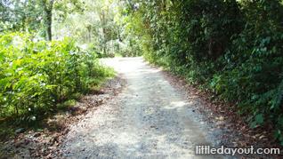 Chek Jawa Trail