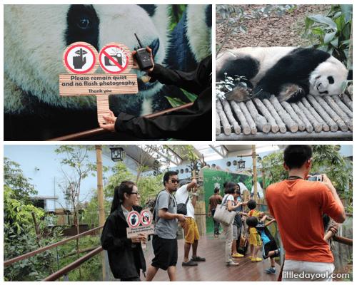Panda Quiet