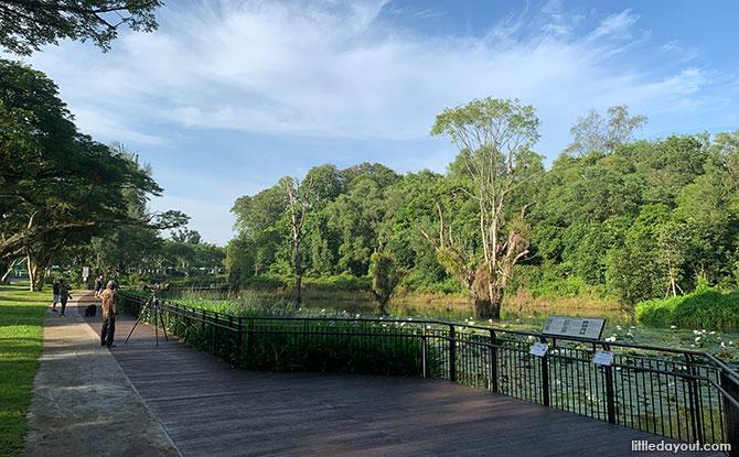 Hampstead Wetlands Park: Water Lilies & Wildlife In Seletar