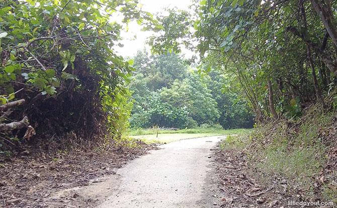Side Road along the Mandai T15 Trail