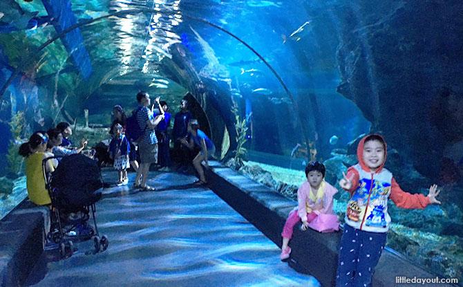 Tropical Ocean and Ocean Tunnel