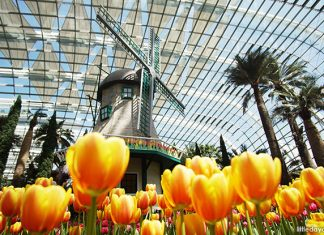Tulipmania 2019 At Gardens By The Bay: The Dutch Countryside Comes To The Flower Dome