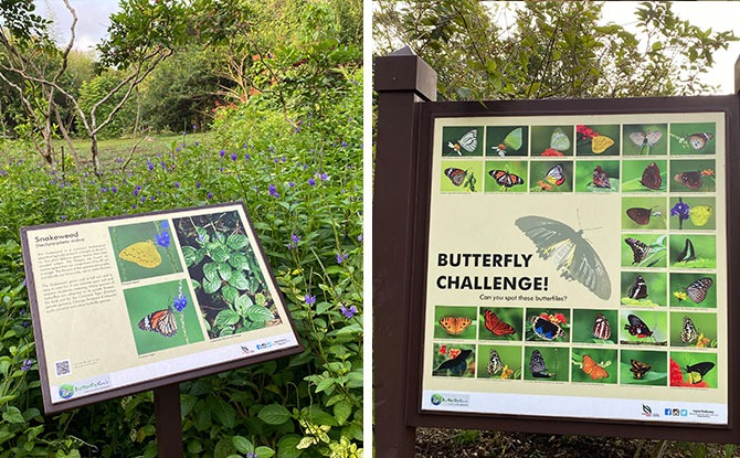 Butterfly Hill Signage + Challenge