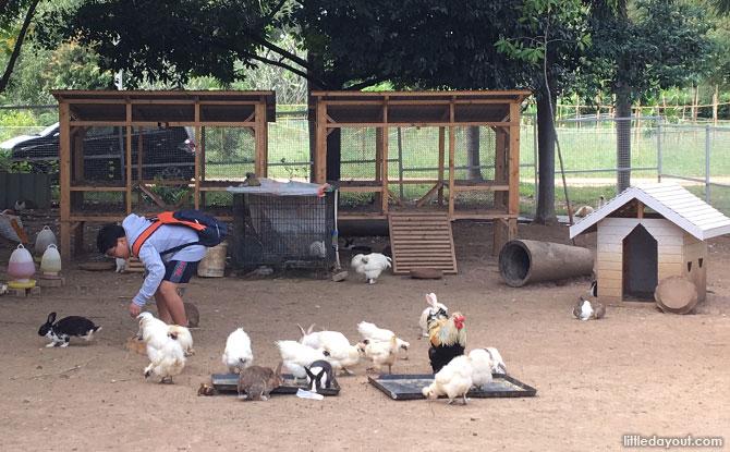 Feeding animals at PB Valley