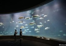 Tokyo Sea Life Park: Tuna, Penguins And Other Marine Encounters By The Bay
