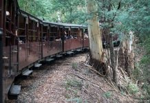 Riding Puffing Billy: A Leisurely Journey Through The Dandenong Ranges, Melbourne