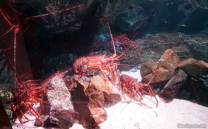 Crustacean display, Kyoto Aquarium