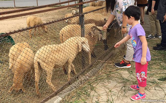 Animals at PB Valley Winery, Khao Yai
