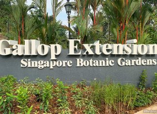 Singapore Botanic Gardens Gallop Extension: Mingxin Foundation Rambler's Ridge And OCBC Arboretum Opens