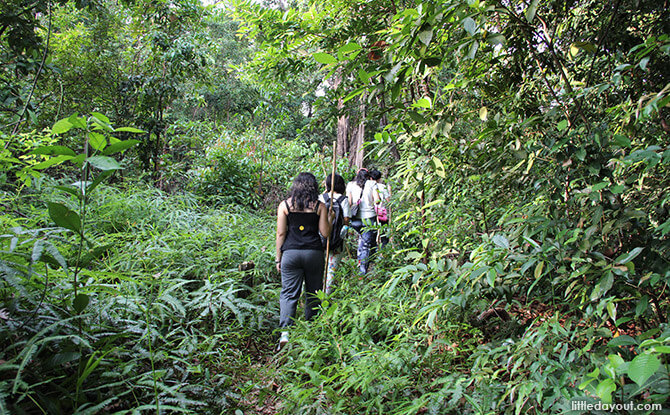 Blue Mountain Kelong Jungle Trek