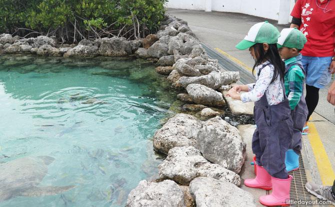 Genki Motobu Village, feeding fish