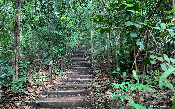 Catchment Path, Bukit Timah Hill