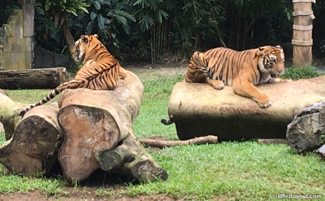 Siberian Tiger Enclosure