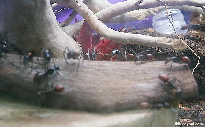 Singapore Ant Museum