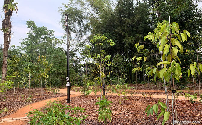 SBG OCBC Arboretum