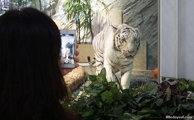 White Tiger at NIFREL