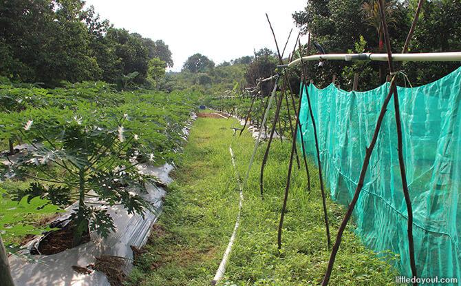 Blue Mountain Kelong Eco Garden