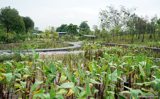 Cleansing biotope pond at Clusia Cove.