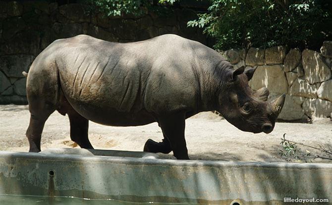 Rhino at Ueno Zoo
