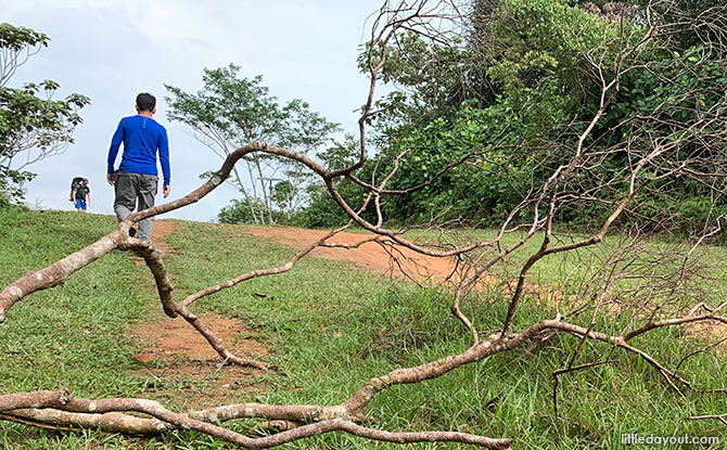 Trekking Across The Central Catchment Nature Reserve: From Windsor To Bukit Timah