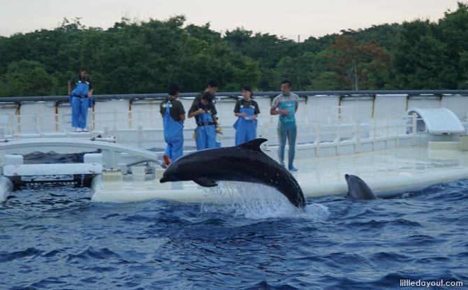 Dolphin Stadium, Kyoto Aquarium