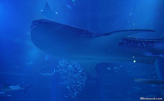 Osaka Aquarium Kaiyukan: A Must-Visit Attraction In Osaka